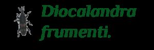 1- Diocalandra-2