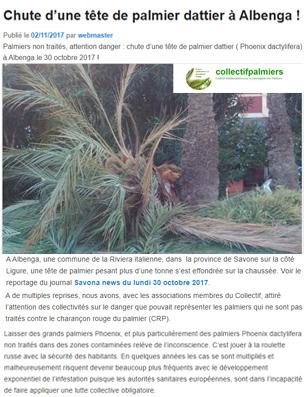 Chute-d'une-tête-de-palmier-dattier-à-Albenga-!