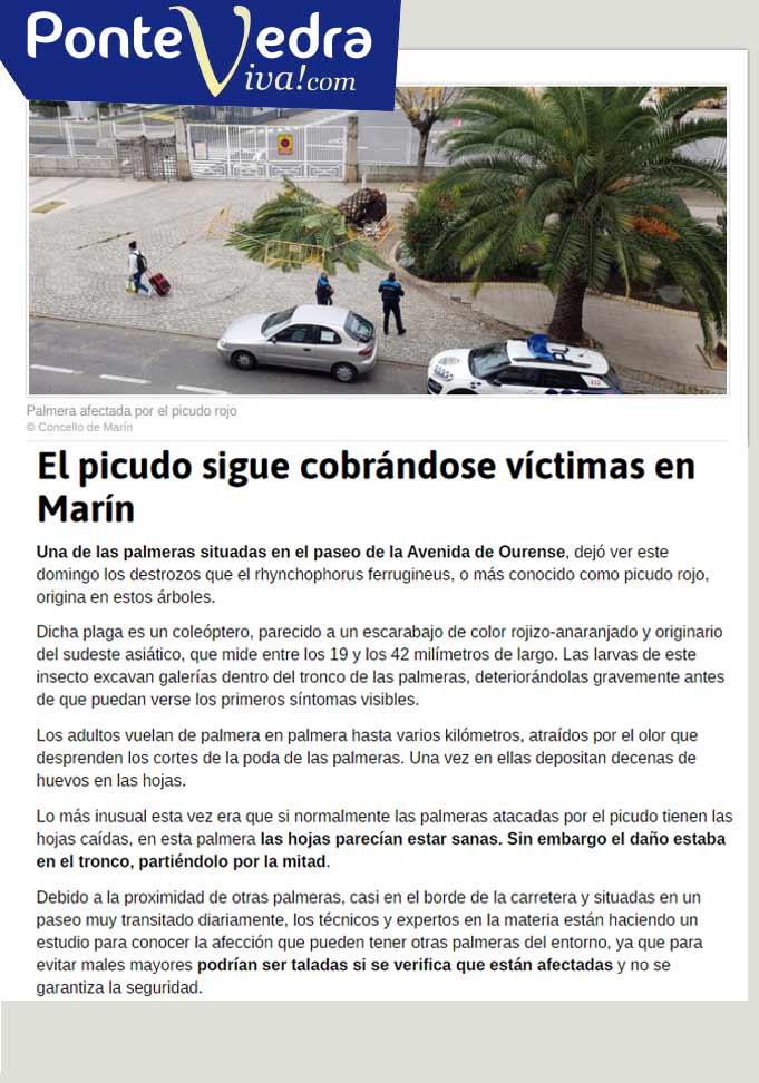 El-picudo-sigue-cobrándose-víctimas-en-Marín