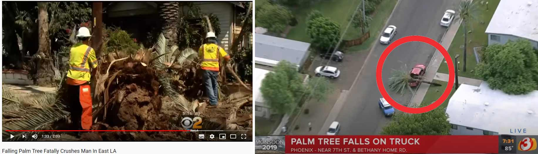 Falling-Palm-Tree-FatallY-Crushes-Man-In-East-LA