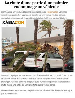 La-chute-d'une-partie-d'un-palmier-endommage-un-véhicule