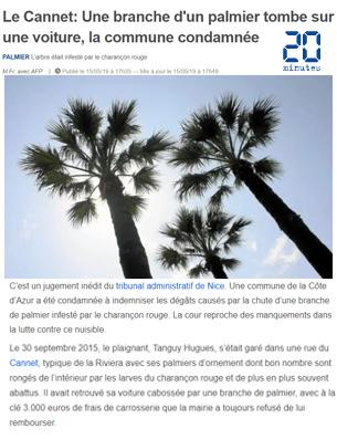 Le-Cannet-Une-branche-d'un-palmier-tombe-sur-une-voiture,-la-commune-condamnée