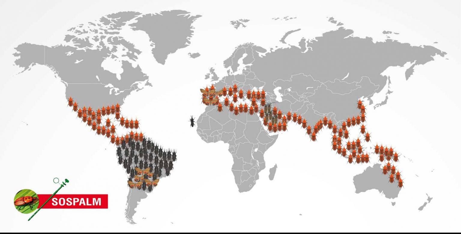 RÉPARTITION MONDIALE DES COLEOPTERES QUI ATTAQUENT LES PALMERAS-2-1536x780