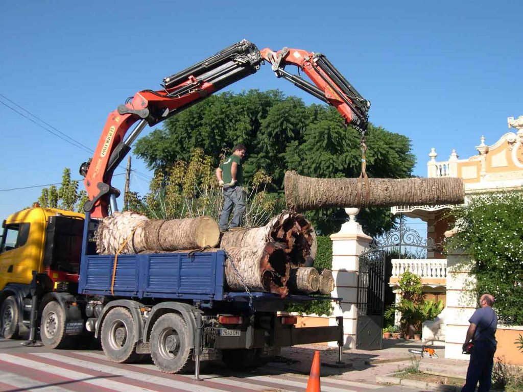 THE COST OF REMOVING A PALM TREE IS INFINITELY GREATER THAN THAT OF TAKING CARE OF IT-1-1024x768