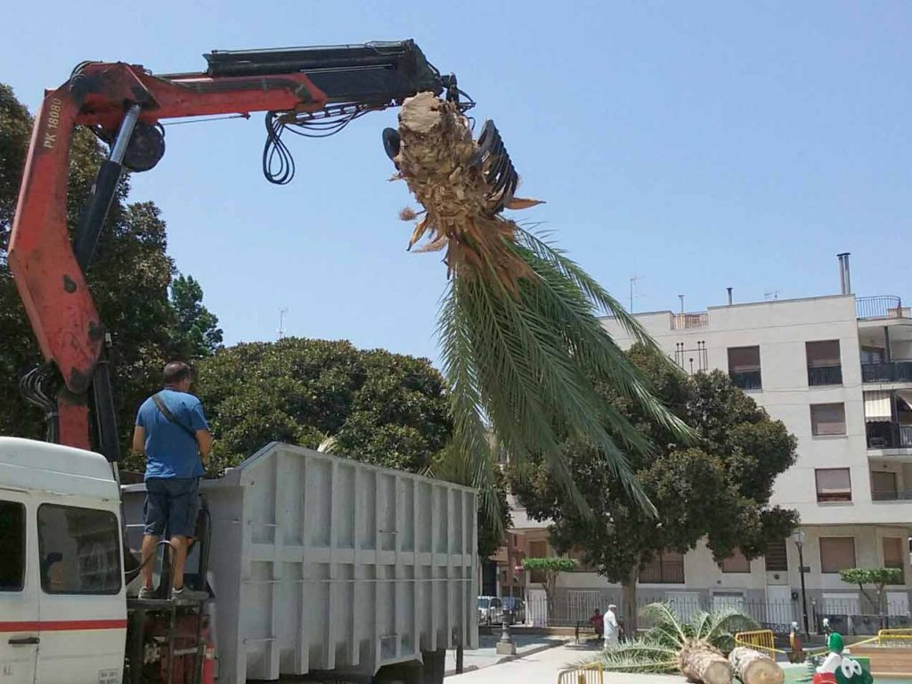 THE COST OF REMOVING A PALM TREE IS INFINITELY GREATER THAN THAT OF TAKING CARE OF IT-2-1024x768