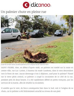 n-palmier-chute-en-pleine-rue
